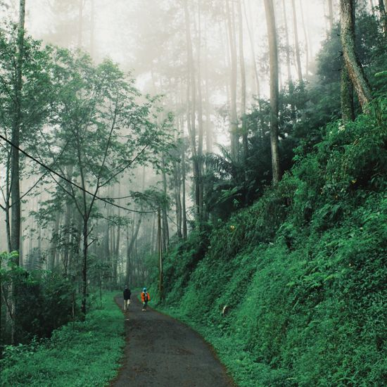 Photo tour of Bandung, Indonesia | Walking out from the fog in Taman Hutan Raya…