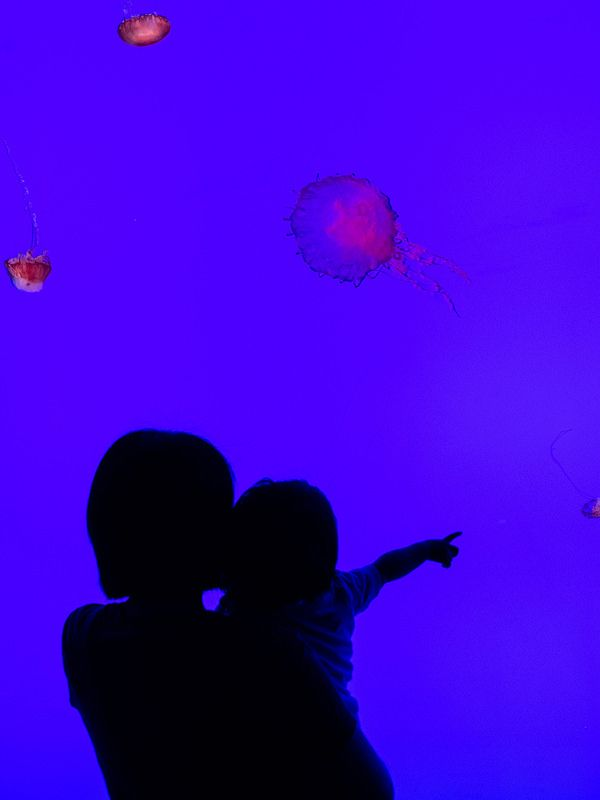Ripley's Aquarium Toronto. Jelly tank.