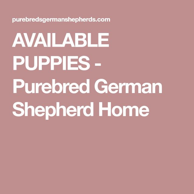 AVAILABLE PUPPIES - Purebred German Shepherd Home