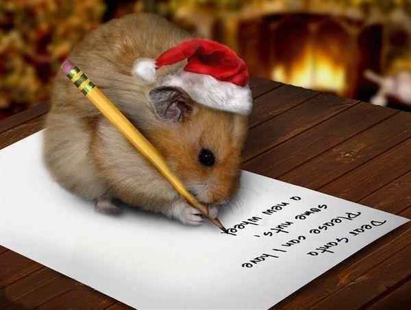 Liste de Noël pour les animaux