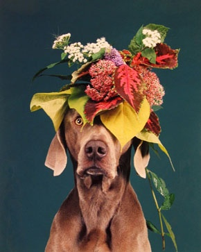 William Wegman craft: make a floral hat for puppy