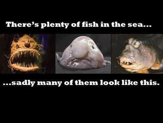 Plenty of fish in the sea makes me smile pinterest for Plenty of fish search