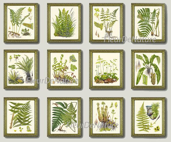 Beautiful set of 12 prints based on antique botanical fern illustrations from 1902 by C. A. M. Lindman. Wonderful details, colors and natural