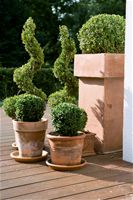 How to cut back boxwood trees - Spring, Trees And Hedges, Tree And Shrub Care, Secateurs, Loppers
