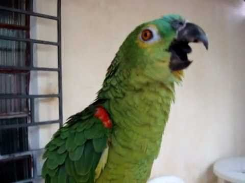 http://www.petcarevision.com/Parrot/video-gallery/video-gallery.php