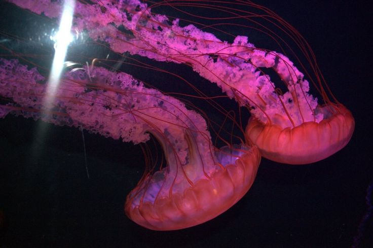 The shades and tones of different colours like red, purple and pink attracted me and forced me to take this picture. The movement shown in a jelly fish is rhythmic to me and i can really well relate to it!