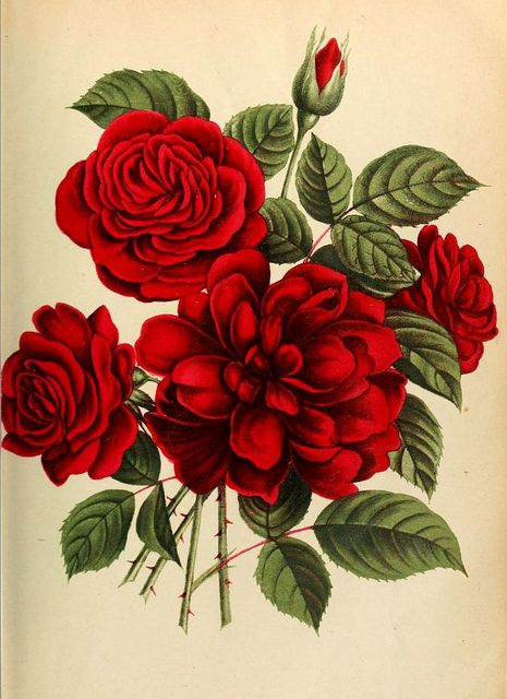 Rose Leuchtfeur   Flickr - Photo Sharing!
