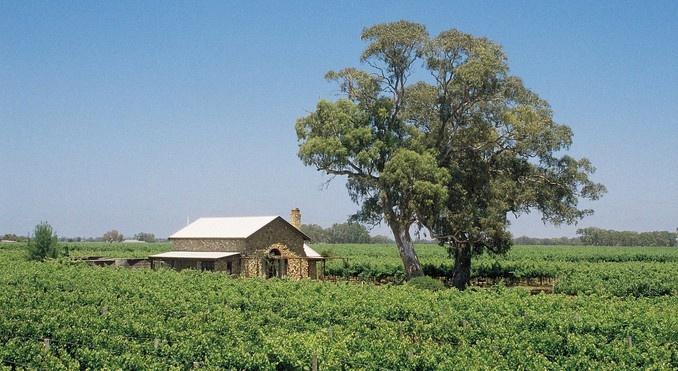 Coonawarra, world famous wine growing region, South Australia
