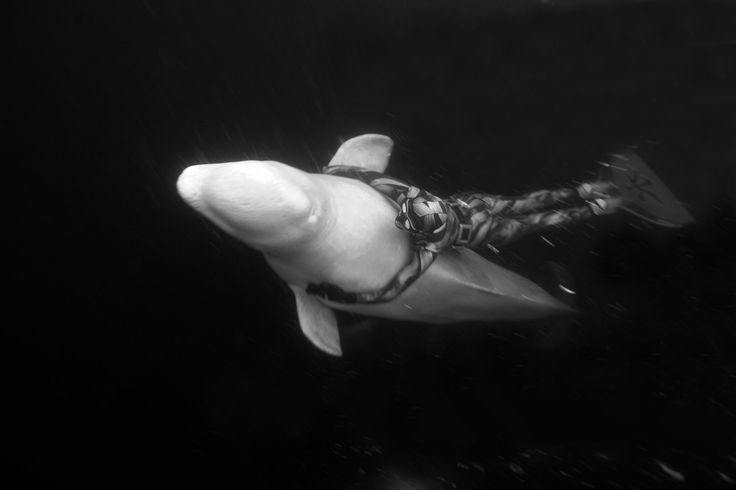 Freediver Julia Petrik hitches a ride from a Beluga whale in Russia's Arctic. Underwater photographer Dan Burton has shot many of the world's top freedivers over the last two decades.