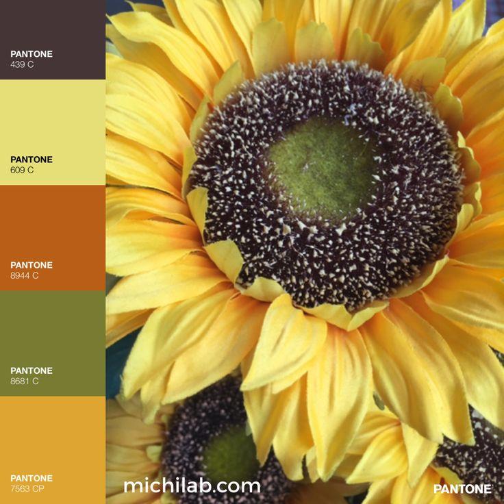 Quella meraviglia di colore giallo chiamata girasole 🌻