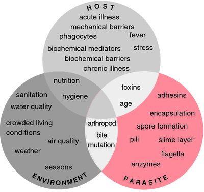 Best 25 venn diagram online ideas on pinterest gcse maths looking for online definition of venn diagrams in the medical dictionary what is venn diagrams meaning of venn diagrams medical term ccuart Images