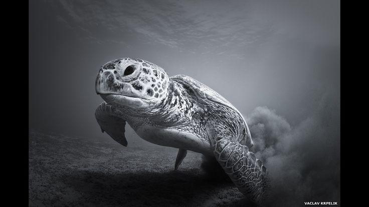 Conheça os vencedores do prêmio de fotografia do zoo de Londres