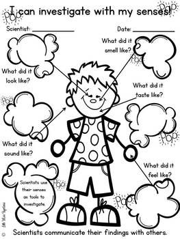 MY FIVE SENSES REPORTS! - TeachersPayTeachers.com                                                                                                                                                                                 More