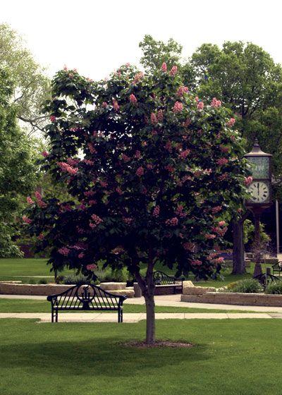 Die besten 25 pee gee hydrangea ideen auf pinterest for Ornamental trees that grow in shade