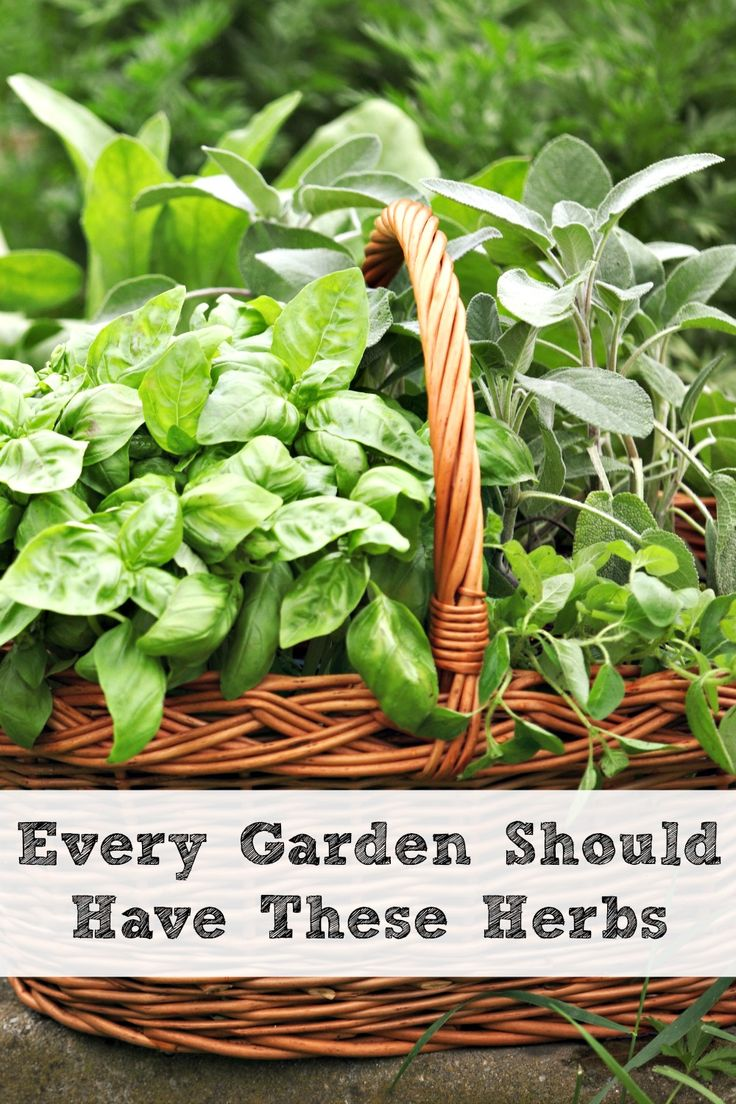 5554 best gardening ideas tips u0026 tricks images on pinterest