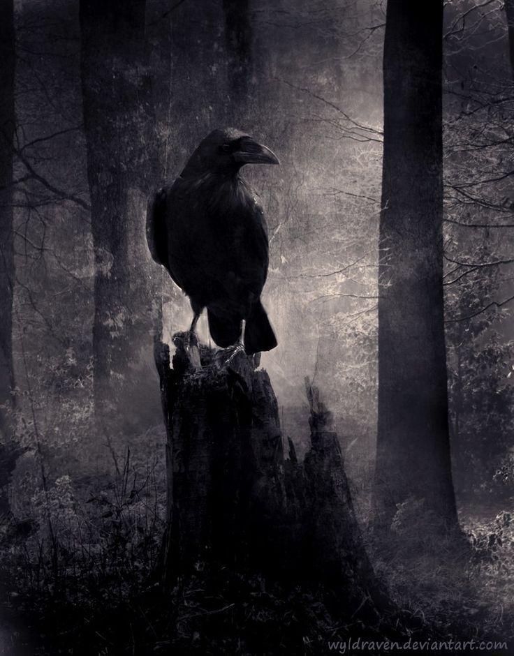 halloween ravens   Creepy raven in the woods...   Halloween