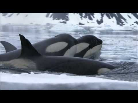 Frozen Planet | Trailer