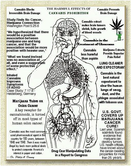 an exaggeration of the harmful effects of marijuana Teenagers, in particular, are susceptible to the negative effects of marijuana because parts of their brain—such as the prefrontal cortex—are still developing.