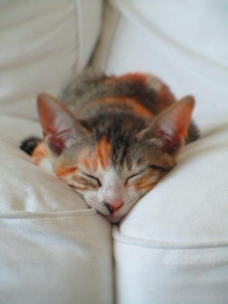 Почему кот сонный