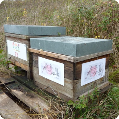 La Marelle éditions offre Un toit pour les abeilles depuis quelques années déjà.