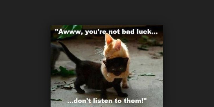 Cat cuties