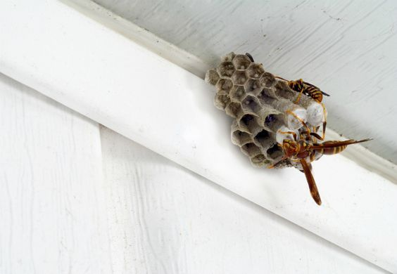 How To: Make a DIY Wasp Trap