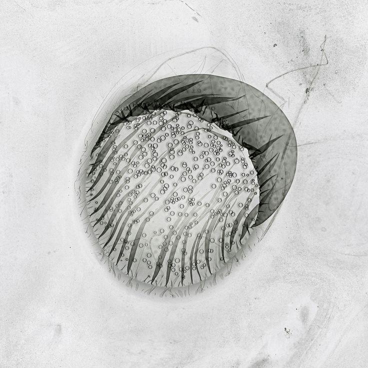 Claus Stolz - Heliographs | LensCulture