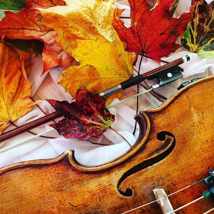 Złota polska jesień chociaż chwilę!  _____________________ #violin | #violino | #violinist | #violinlife | #violingirl | #skrzypaczka | #skrzypce | #muzyka | #geige | #fiddle | #musicaclassica | #instrument | #instaclassical | #bestmusicshots |  #soloist | #virtuoso | #stringmusician | #violinsolo | #jj_musicmember | #classicfm | #talentedmusicians | #instamusiciansdaily | #skrzypczyni | #jesien | #liscie | #autumnleaves