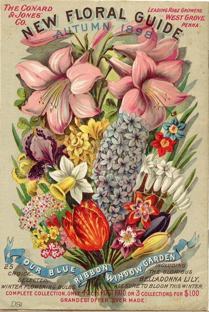 flower-seed-catalogs-catalogs-for-spring-blooming-bulbs-1892-1906-matthew39s-island.jpg (686×1024)