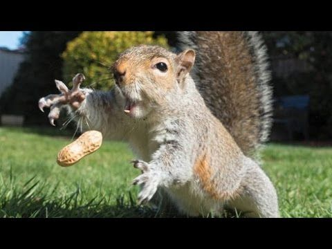Very Funny Videos: The most ridiculous & funniest ANIMAL videos #3 - Funny animal compilation - Watch & laugh! - Check out Best Funny Videos & Jokes from Youtube, Facebook, Vine, Twitter, etc. Let's Laugh Out Loud http://alotfunnyvideos.com/post/150819351777/the-most-ridiculous-funniest-animal-videos-3