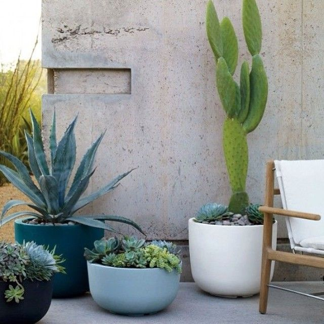 Cacti and succulents, my preferred houseplants