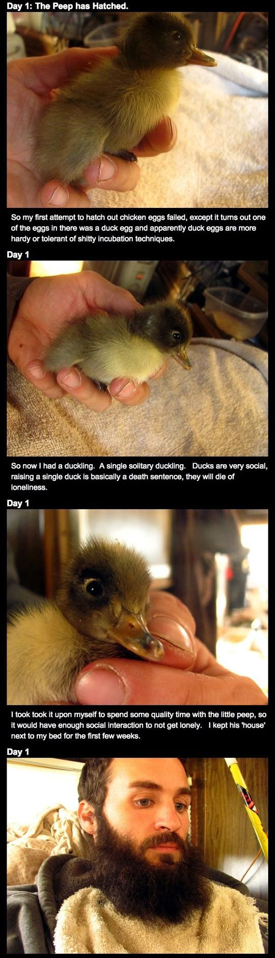How this man's epic beard saved a duckling's life is brilliantly beautiful…