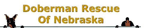 http://www.doberescue-ne.org/#    Doberman Rescue of Nebraska