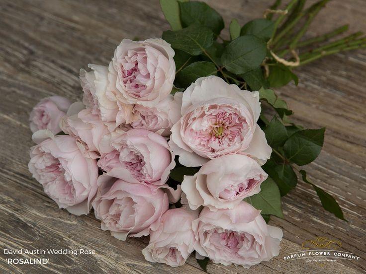 David Austin Wedding Rose Rosalind