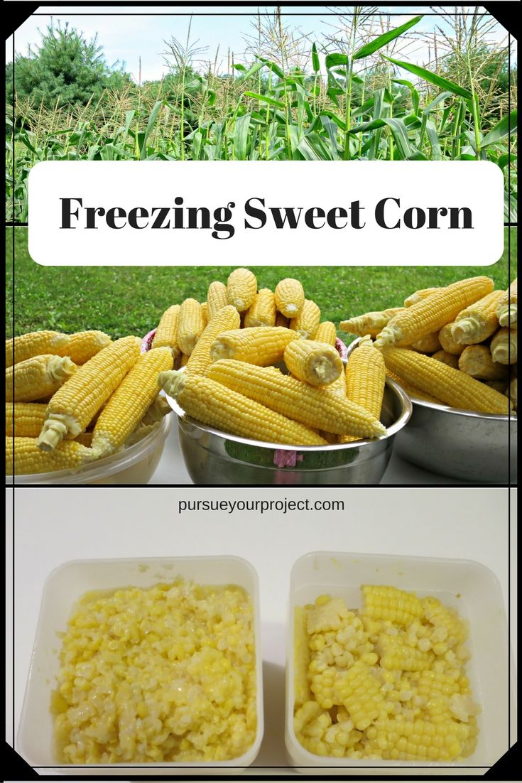 Easy instructions with pictures on the steps to prepare sweet corn for your freezer. Enjoy your produce year round! via @pursueproject