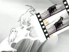 Dağ keçisi yavrularının doğar doğmaz gördüklerini biliyor muydunuz? Video