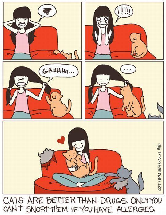 Funny: Cat vs Human comics