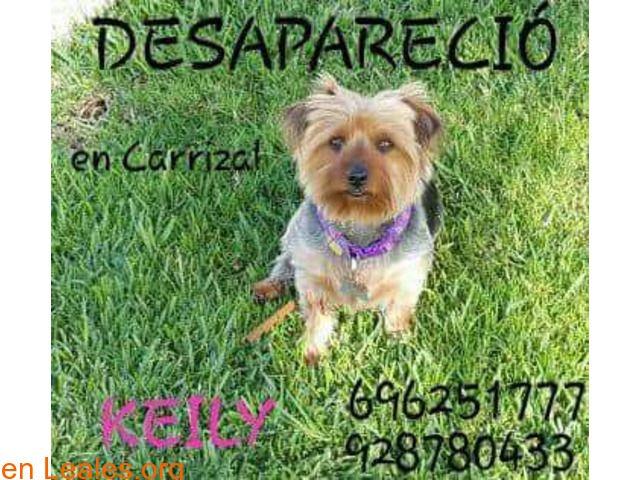 Perros perdidos  España  Las Palmas - Gran Canaria  Carrizal March 08 2018 at 10:41PM   Keily  #PERDIDO #ENCONTRADO  Contacto y Info: https://leales.org/perdidos-o-encontrados/perros-perdidos/keily_i3658 #Difunde en #LealesOrg un #adopta y sé #acogida para #AdoptaNoCompres O un #SeBusca de #perro o #gatos ℹ DESAPARECIÓ KEILY 07/03/2018 Tiene CHIP Barrio Nuevo (Carrizal) Tiene 4 años con la cola larga espolones en las patas traseras y está igual que en las fotos (recien pelada). Su FAMILÍA la…