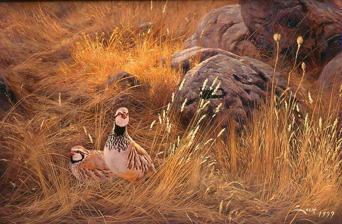 Perdiz Roja. Oleo sobre tablex. Manuel Sosa © 2000. Ua descansa y la otra vigila. Aves inquietas donde las halla. Dos bellas Perdices Rojas en un mar de gramíneas