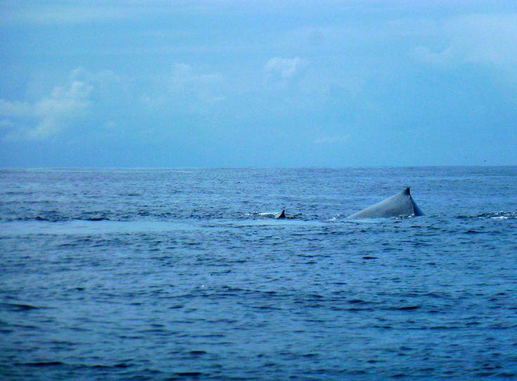 whales ocean ponto do ouro mozambique