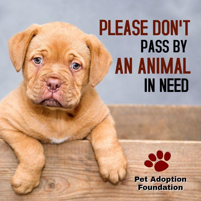 Animal Adoption Campaign Instagram Post Template Pet Adoption Pets Free Pet Adoption