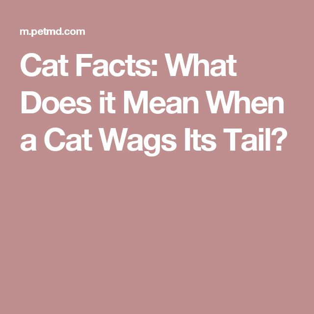 Cat Facts: What Does it Mean When a Cat Wags Its Tail?