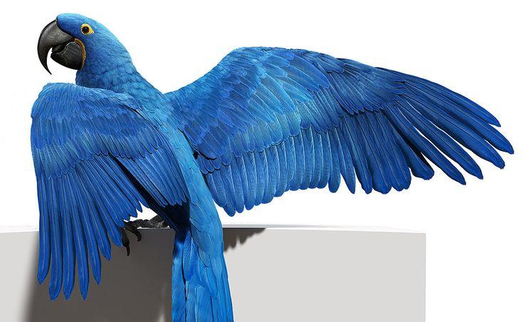 D'valia Studios - Blue Macaw