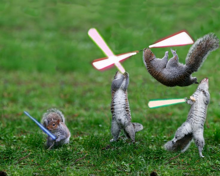 If squirrels had access to the force, could they weild ...