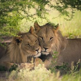 Most Exciting Honeymoon Destinations for Animal Lovers - bollywoodshaadis.com