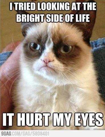 Grumpy kitty's just gotta wear shades all the darn time.