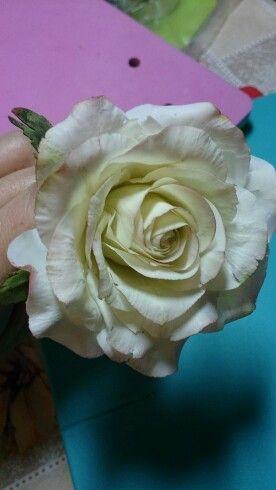 Роза сахарная