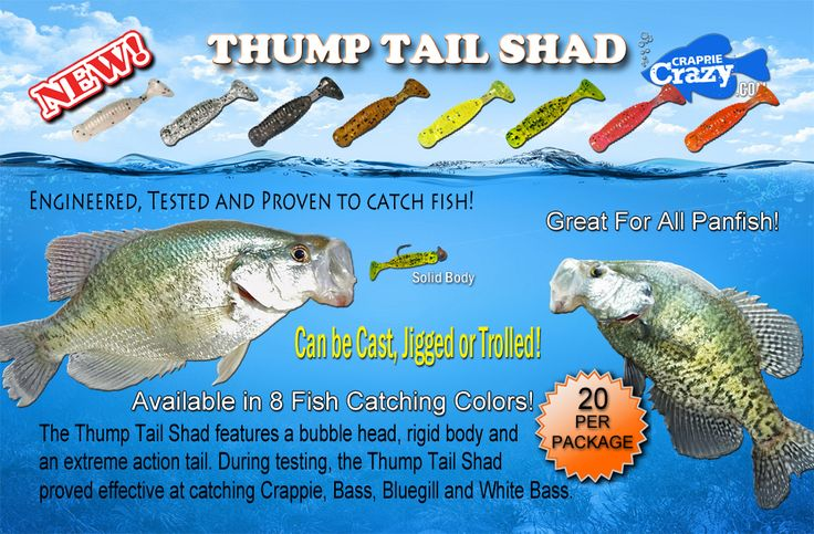finding the right rod and lures for crappie fishing My bonus crappie fishing tips to keep minnows alive the longest as well as have one of the better hookup ratios are to hook them right through the nostril with rigs, all you need to do is taking a proper pole with the suitable rig on it.