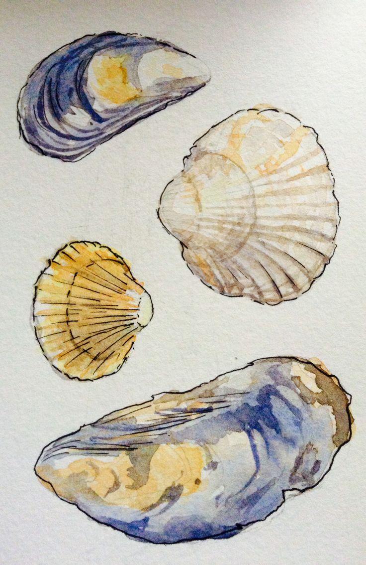 Shells watercolour