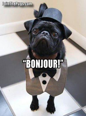 """""""Bonjour!"""""""